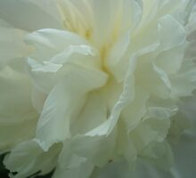 Petal Soft Ruffles by ctheworld