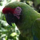 Pretty Boy from Bali Bird Park by chijude