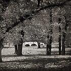 Fee's Bridge in Autumn by Penny Alexander