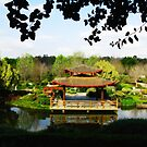 Reflections of a Japanese Garden - Hunter Valley by Marilyn Harris