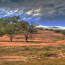 Sunburnt Country - Near Hill End , NSW Australia - The HDR Experience by Philip Johnson