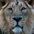 King of the Jungle © by Cath Ollenberg