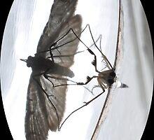 Moth in a mirror by Karman De Lange