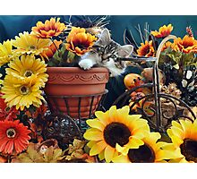 Venus ~ Cute Kitty Cat Kitten in Fall Colors Photographic Print