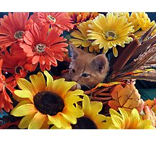Di Milo ~ Cute Kitty Cat Kitten in Fall Colors Photographic Print