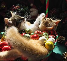 Venus & Di Milo ~ Serenity ~ Christmas Kittens by Chantal PhotoPix