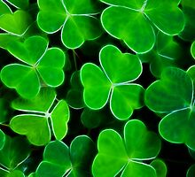 Find the 4 Leaf Clover by Maggie Lowe