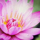 : Lotus : by Only K Photography