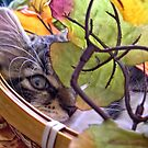 Venus ~ Cute Kitty Cat Kitten ~ One Eye Peeking through Fall Leaves ~ Autumn Colors by Chantal PhotoPix