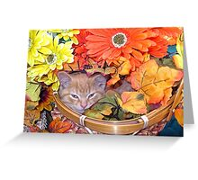 Di Milo ~ Hidden ~ Fall Kitten Greeting Card