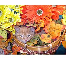Di Milo ~ Hidden ~ Fall Kitten Photographic Print