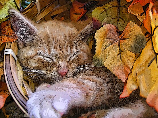 Image result for cat in fall