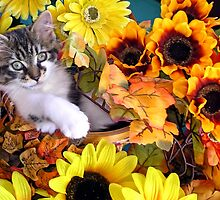 Venus ~ Hanging Out ~ Cute Fall Kitten by Chantal PhotoPix