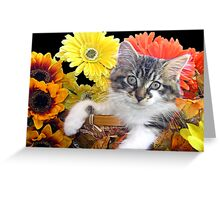 Venus ~ Cute Kitty Cat Kitten in Decorative Fall Colors Greeting Card