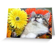 Venus ~ Cute Kitty Cat Kitten in Decorative Fall Flowers Greeting Card