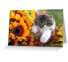 Venus ~ Cute Kitty Cat Kitten in Fall Sunflowers and Gerberas Greeting Card