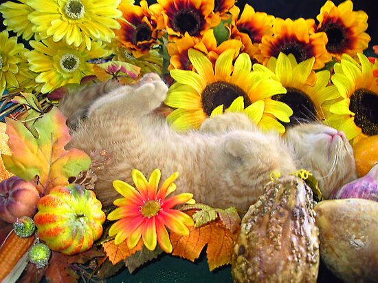 Di Milo ~ FAll Autumn Harvest ~ Tabby Kitty Cat Kitten by Chantal PhotoPix