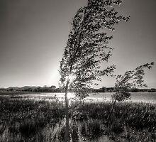 Wind by Bob Larson