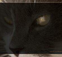 He Sees All © Vicki Ferrari Photography by Vicki Ferrari