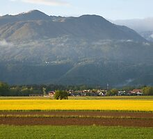 rapeseed field in Brnik with Kamnik Alps and Krvavec ski resort in the background, Slovenia. by Ian Middleton