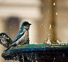 Sparrows In Blue by Diego  Re