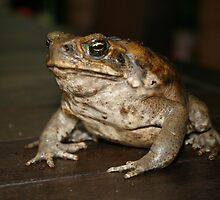 The Imported Cane Toad by aussiebushstick