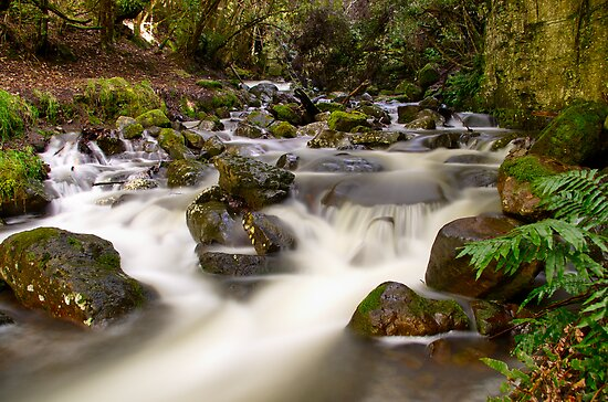 """""""Rivulet"""" by Phil Thomson IPA"""