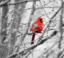 Cardinal In A Pear Tree by Kodaking