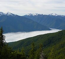 Fog below Hurricane Ridge by mrscaer
