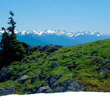 Overly-green Hillside at Hurricane  Ridge by mrscaer