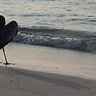 Heart of the Heron, Kuredu Resort Island, Maldives by DJ-Stotty