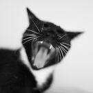 Say 'ahhhhh' by DJ-Stotty
