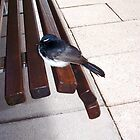 Bus Stop Bird by Robert Phillips