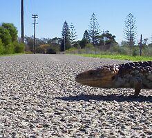 Bobtail Crossing Road by Robert Phillips