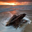 Papamoa jagged stump rise by Ken Wright