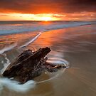 Deadwood Orange Rise ~ Papamoa by Ken Wright
