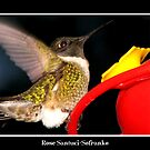 Incoming! (Ruby-Throated Hummingbird) by Rose Santuci-Sofranko