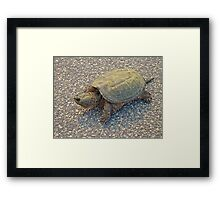 Common Snapping Turtle - Chelydra serpentina Framed Print