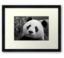 Giant Panda Framed Print