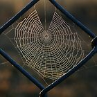 Web Fence by bluehorizons