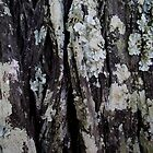 Lichen on a Tree by Adelheid