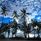 Palm Cove by Scott Schrapel