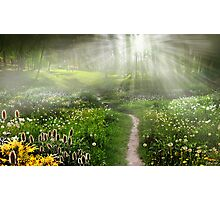 Meadow Trail Photographic Print