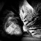 Sleeping Cat by DionNelson