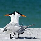 TERN DANCING by Kathy Cline