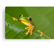 Peek-a-frog Metal Print