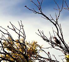 Reach for the Sky by prosephotos