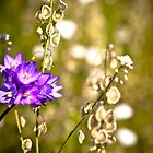 Wildflower by timscottrom