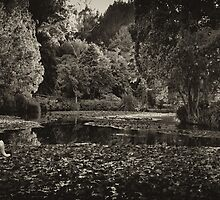 Peace over the Lake by Linda Cutche