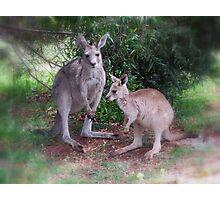 Kangaroos at Buchan Photographic Print